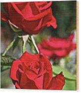 National Trust Rose Wood Print
