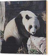 National Zoo Panda Wood Print