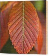 Natural Bronze Wood Print