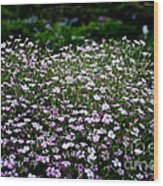 Natural Carpet Wood Print