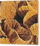 Natural Sponges Wood Print