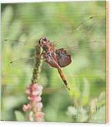 Nature Square - Saddleback Dragonfly Wood Print