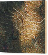 Nature's Abstractions IIi Wood Print