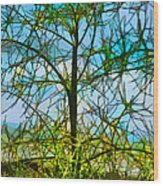 Nature's Church Windows  Wood Print