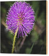 Natures Fireworks Wood Print
