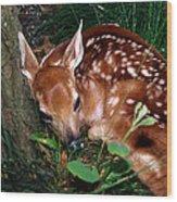 Nature's Precious Creation Wood Print