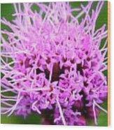 Natures Purple Wood Print