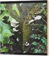 Natures Right Angle Degrees Wood Print