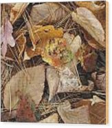 Nature's Still Life 1 Wood Print