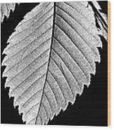 Natures Wonders Wood Print