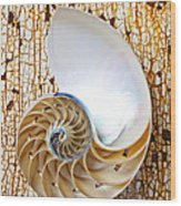 Nautilus Shell On Rusty Table Wood Print