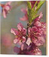 Nectarine Blossoms Wood Print