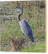 Neighborhood Heron Wood Print