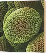 Nematode Worm Egg, Sem Wood Print