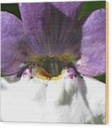 Nemesia From The Tapestry Mix Wood Print