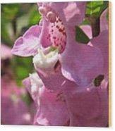 Nemesia Named Poetry Lavender Pink Wood Print