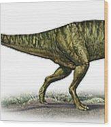 Neovenator Salerii, A Prehistoric Era Wood Print