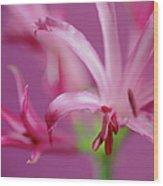 Nerine Flowers Wood Print