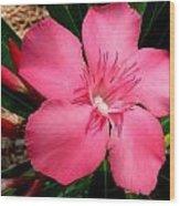 Nerium Oleander Pink Wood Print