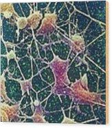 Nerve Cells, Sem Wood Print