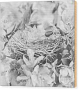 Nest In Black And White Wood Print