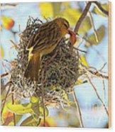 Nesting Instinct Wood Print by Carol Groenen