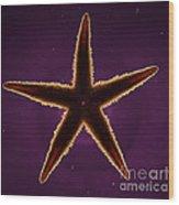 Netted Sea Star Wood Print