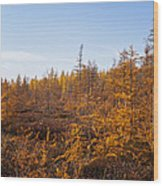 Nevergreens Wood Print