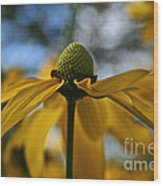 New Cone Flower Wood Print