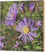 New England Aster Wildflower - Purple Wood Print