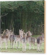 New Forest Deer Wood Print by Karen Grist