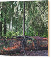 New Growth Wood Print by Anthony Jones