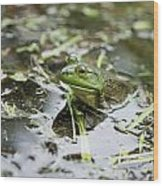 New Hampshire Frog Wood Print