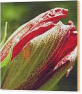 New Hibiscus Wood Print