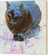 New Kitty Blue Wood Print