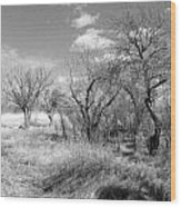 New Mexico Series - Bare Beauty Wood Print