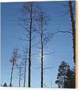 New Mexico Series - Bare Tree Sky  Wood Print