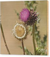 New Mexico Thistle II Wood Print