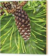 New Pine Wood Print