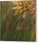 New Pines Cones In Spring  Wood Print