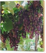 New Wine Wood Print by Alison Richardson-Douglas