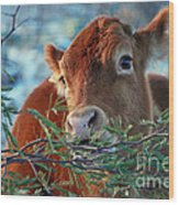 New Years Morning Cow Wood Print