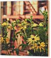 New York City Flowers Along The High Line Park Wood Print