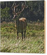 New Zealand Elk Wood Print