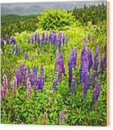 Newfoundland Meadow Wood Print by Elena Elisseeva