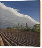 Newly Planted Potato Field And Clouds Wood Print