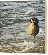 Niagara Duck Wood Print