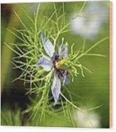 Nigella Flower Wood Print