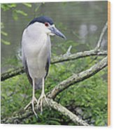 Night Heron On Branch Wood Print