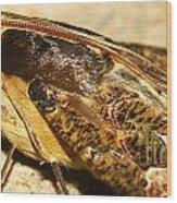 Night Moth Wood Print